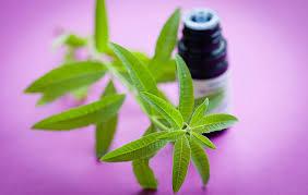 aromatherapy classes
